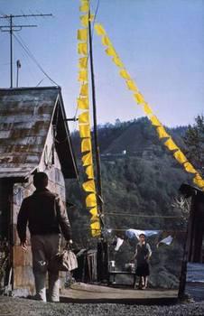 yellowhandkerchiefimg01_2.jpg
